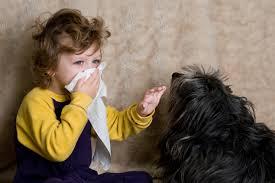 How to Avoid Pet Dander, Pet Hair,pet AllergiesProblem?