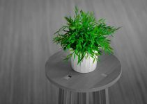 plants for indoor air quality