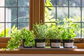 """This content will educate you on the relationship and effect of Humidity, Mold and Indoor Garden."""" Humidity, air quality and mold are the major parameters"""