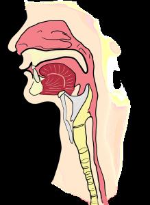 dry air impact on sinuses