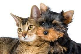 What is Pet Dander? How Does it Cause Pet Allergies?