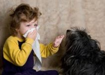 How to Avoid Pet Dander, Pet Hair, Pet Allergy Problem?