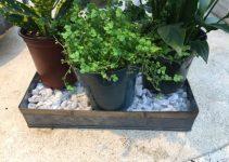 Humidity, Mold and Indoor Garden