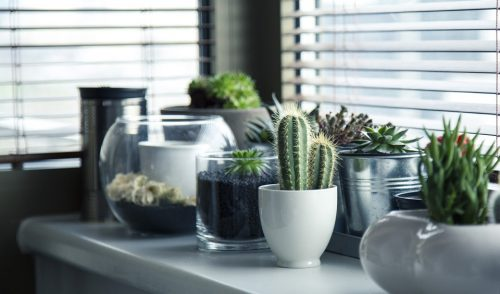 indoor plants for clean air